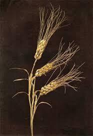 Χρυσός στάχυς από τις Συρακούσες, 4ος-3ος π.Χ. αι.