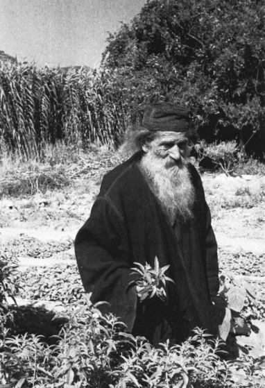 22. Μοναχός συλλέγει ιαματικά βότανα